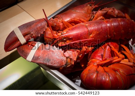 close up of a big red  lobster in tray