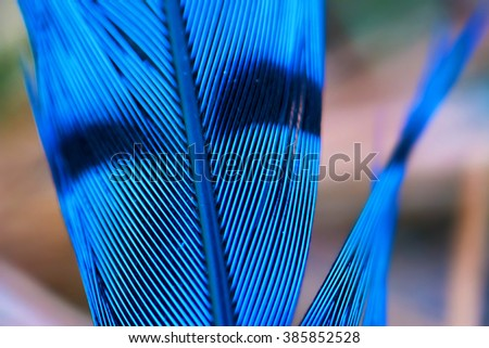 Close-up of a Blue jay feather (Cyanocitta cristata) - stock photo