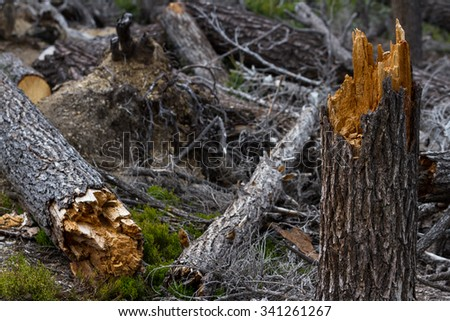close up of a broken tree in the forest after a wind storm
