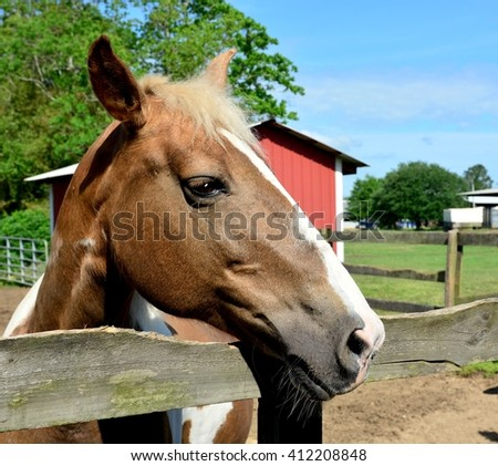 Close up of a brown and white mare horse's head looking over corral railing, with barn and trees in the background.