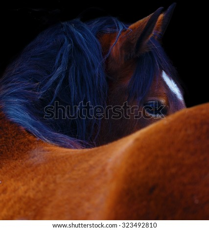 Close Up of a brown horse eye. On black background. - stock photo