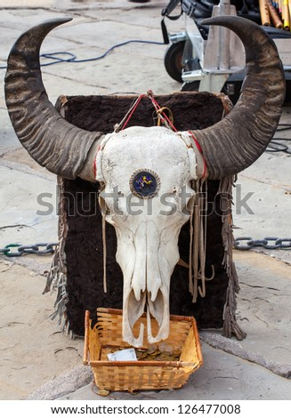Close up of a Buffalo skull in the street - stock photo