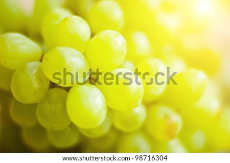 Close-up of a bunch of grapes on grapevine in vineyard. - stock photo