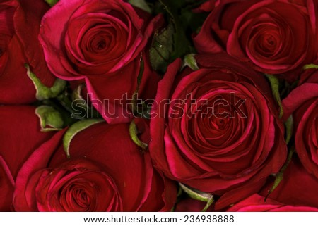 Close up of a bunch of red roses breaking bud viewed from above - stock photo