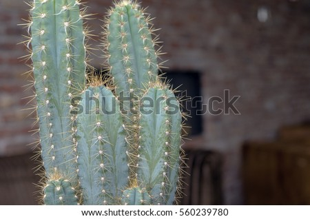 Close up of a cactus standing in a interior of a restaurant