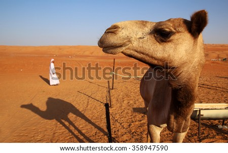 Close-up of a camel and a bedouin, Omani desert  - stock photo