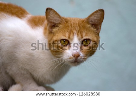 Close-up of a cat - stock photo