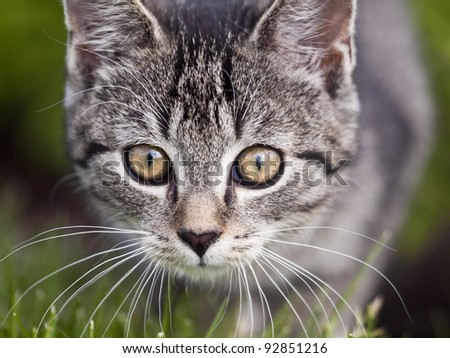 Close up of a cat - stock photo