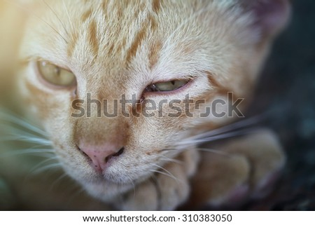 Close up of a cat and dramatic lighting in the dark. - stock photo