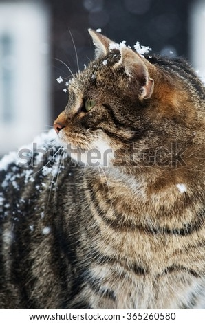 Close up of a cat in snow - stock photo