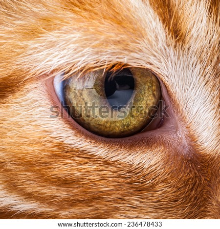 Close-up of a cat's muzzle on a white background