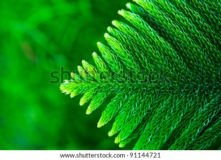 Close up of a Christmas tree. - stock photo