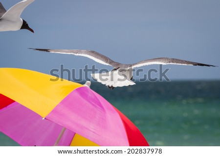 close up of a colorful umbrella on a beach with a bird flying over it - stock photo