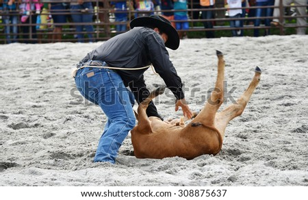 Close up of a cowboy bringing down a calf in a rodeo event