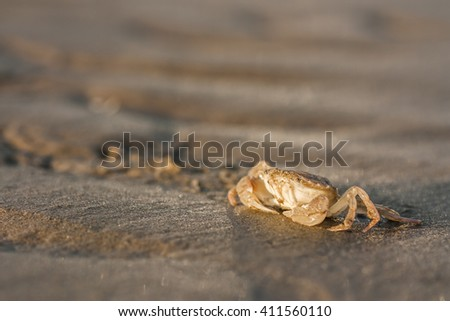 Close up of a crab on the shoreline at dawn - stock photo