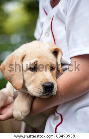 Close up of a cute yellow Labrador puppy being held in the arms of a young boy. Shallow depth of field.