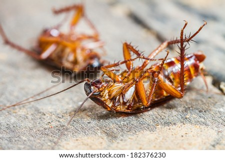 Close up of a death cockroach on wooden