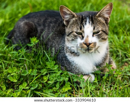 Close up of a domestic cat on the grass.