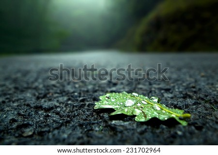 close-up of a fallen leaf on the road on a rainy day - stock photo