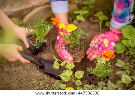 Close-up of a female hands planting flowers in the garden.