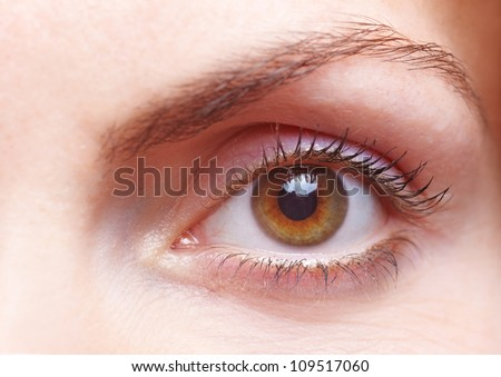 Close-up of a female human eye with eyebrow - stock photo