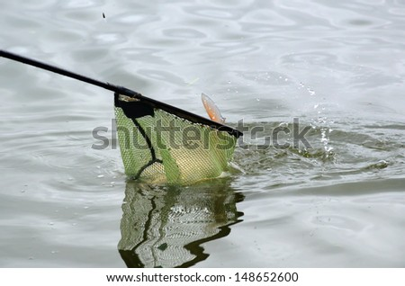 Close up of a fishing net with freshwater fish - stock photo