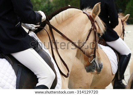 Close up of a fjord horses on a dressage event - stock photo