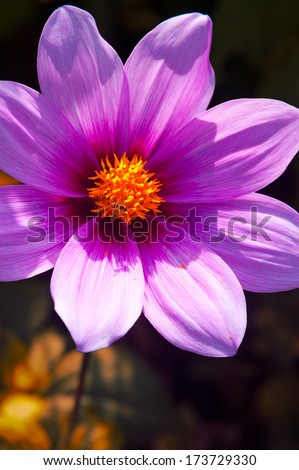 Close-up of a flower, Civic Center, San Francisco, California, USA - stock photo