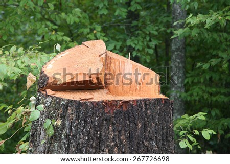 Close up of a freshly chopped down tree  - stock photo