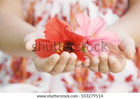 Close up of a girl's hands holding and offering red and pink hibiscus flowers. - stock photo