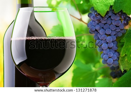 Close-up of a glass and bottle of red wine with grapes growing on the vineyard on background - stock photo