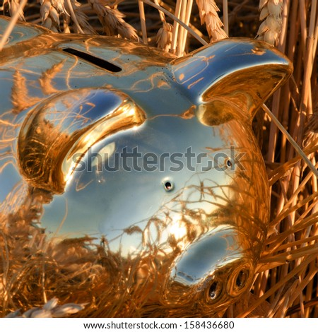 Close up of a gold piggy bank in a field of wheat - stock photo