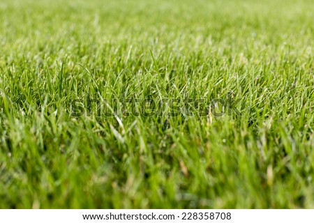 close up of a grass for backgrounds