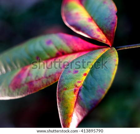 Close up of a Green leaf in nature - stock photo