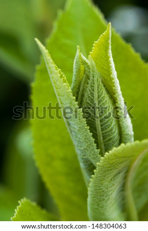 Close up of a green plant