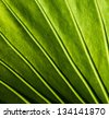 Close-up of a green plant leaf - stock photo