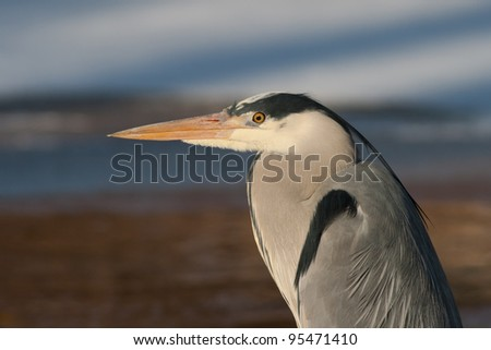Close-up of a heron