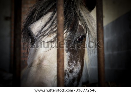 Close up of a horse behind the bars of a stable. - stock photo