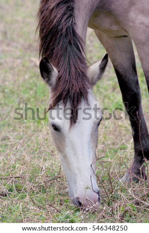 Close up of a horse eating grass at a pasture field