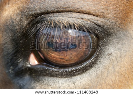 close up of a horse eye - very shallow field of depth - stock photo