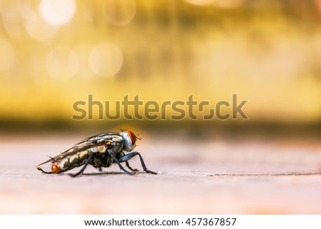 Close up of a horse fly