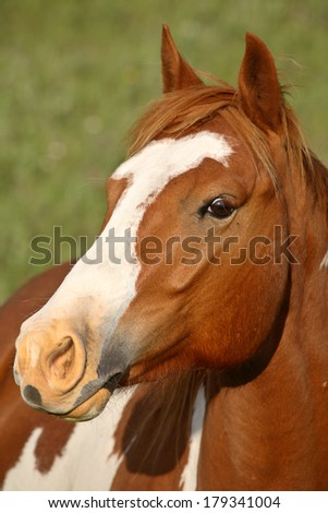 Close up of a horse in scenic Saskatchewan - stock photo
