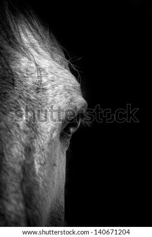 close-up of a horse, monochrome - stock photo