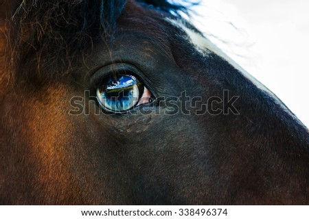 Close up of a horses eye