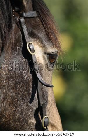 Close up of a horses head. - stock photo