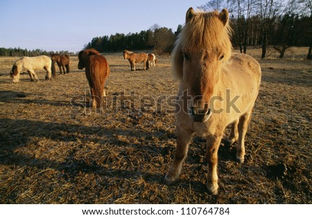 Close-up of a horses on a farm
