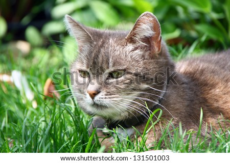 Close-up of a house cat in the Garden