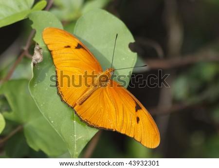 Julia Butterfly Hill American Heroin