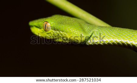 Close up of a kind of green snake in Thailand