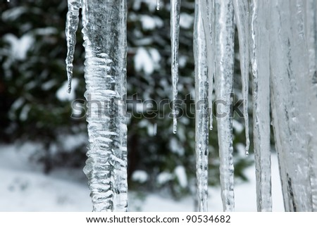 Close up of a large wavy icicle with more melting icicles beside it and a soft winter background. - stock photo